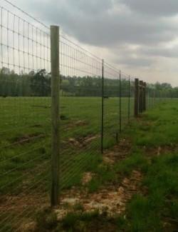 Deer fence