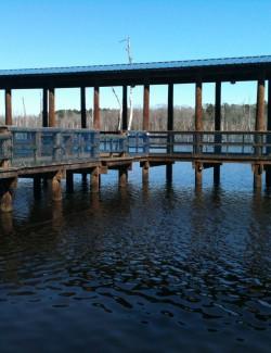 Piling – Cobb Lumber Company: Poles, Pilings, Timbers