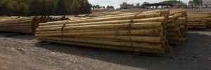 treated wood poles utility power poles powerline poles