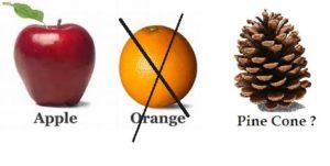 pine cone compared
